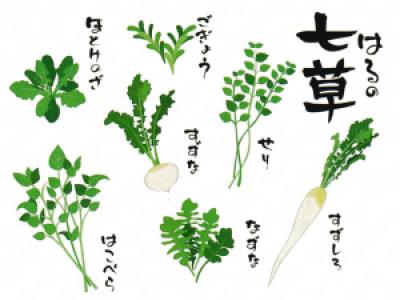 春の七草 考