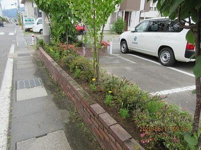 長野県建設業協会から頂いたマリーゴールドを花壇に植えました!