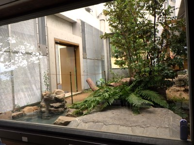 茶臼山動物園「オランウータンの森」 ①内覧会が行われました