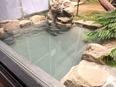 茶臼山動物園「オランウータンの森」 ③特殊工法が光る人工池