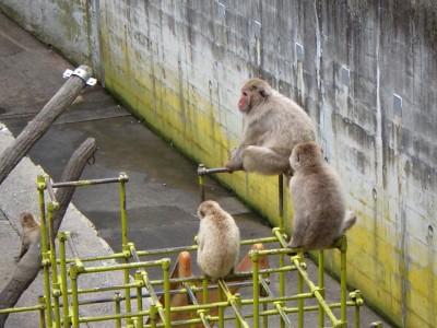 茶臼山動物園「サマーナイトZOO」 夜の動物園を見に行こう!
